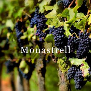 Monastrell