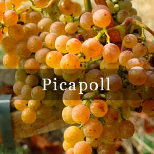 Picapoll