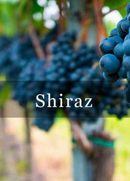 Syrah/Shiraz