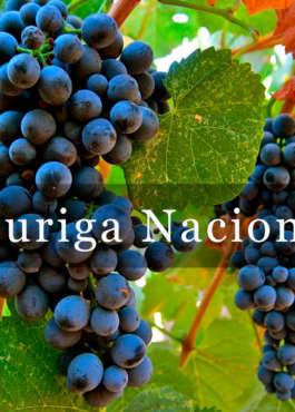 Touriga Nacional